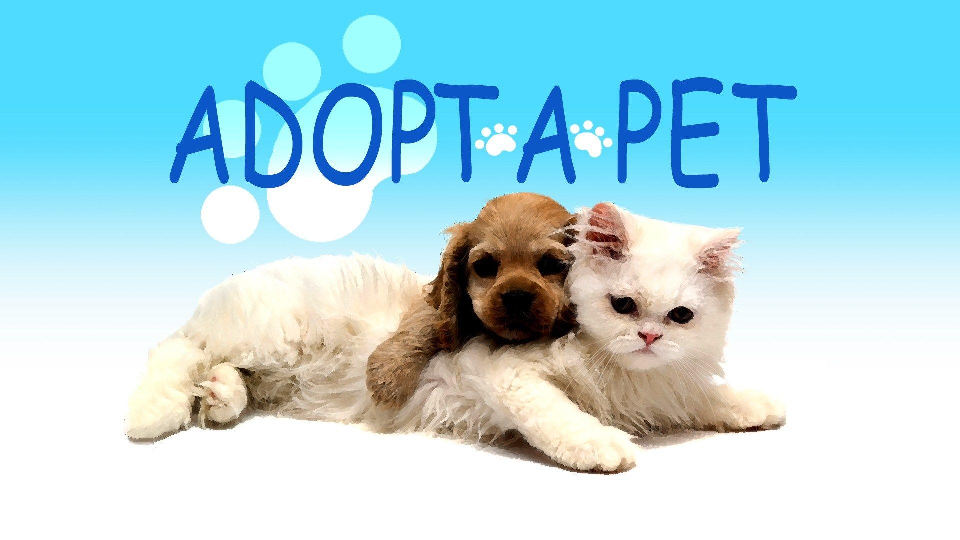 Adopt A Pet Tuesday Scout Junie Zoey Puppy Adoption Kitten Adoption Pet Adoption Center