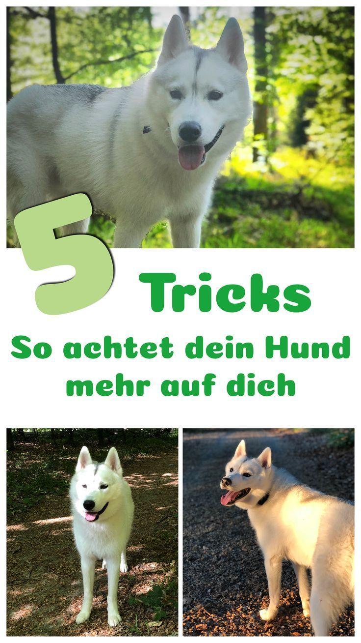 Pin Von Ma Be Auf Hundekind Hunde Hundchen Training Hunde Korpersprache