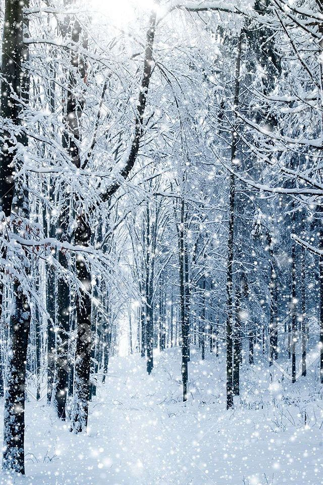 Winter Forest Wallpaper Christmas Background Hd