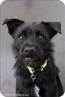 Dublin, CA - Terrier (Unknown Type, Medium) Mix. Meet Fargo, a dog for adoption. http://www.adoptapet.com/pet/12148007-dublin-california-terrier-unknown-type-medium-mix
