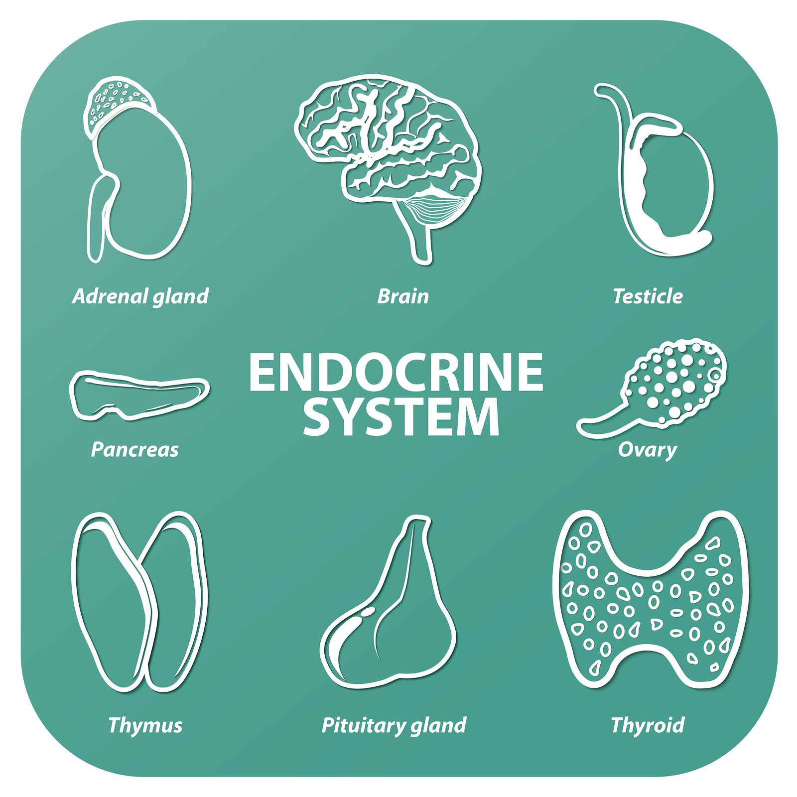 How To Support Your Endocrine System So You Can Have