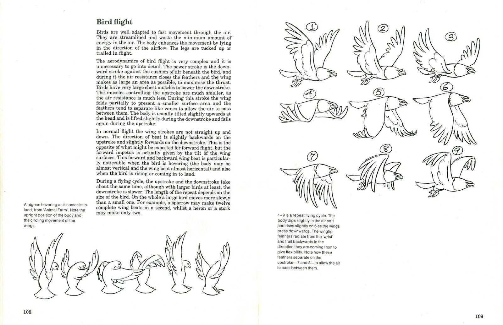 Bird Flight Patterns New Design Ideas