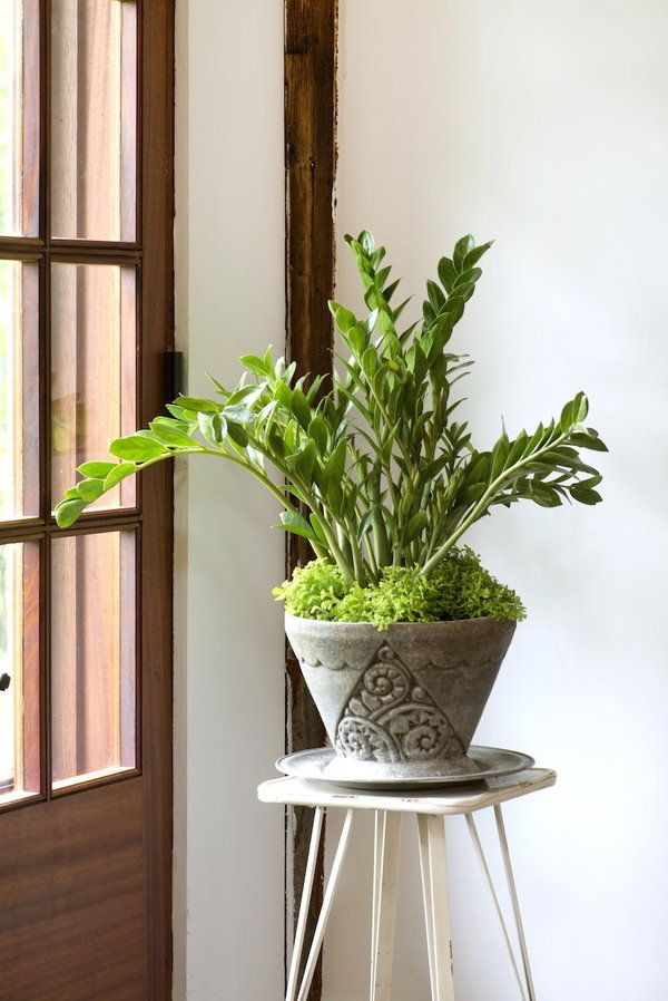 Zz Plant Decor Pots
