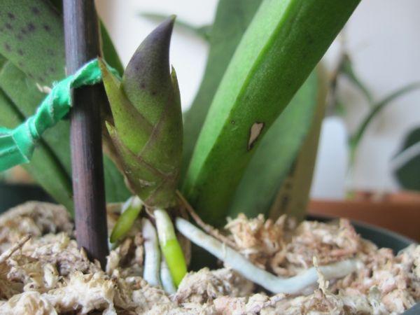 Orchideen Pflegen Und Reiche, Schöne Blüten Zu Hause