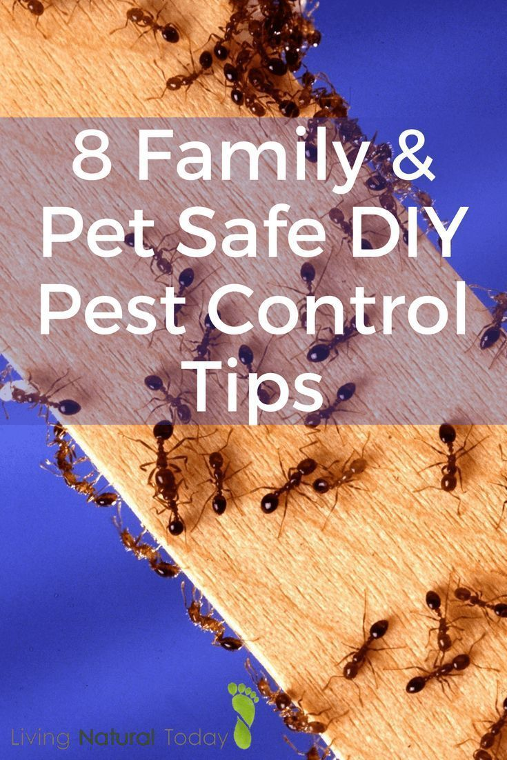 8 DIY Pest Control Tips That Are Family and Pet Safe Diy