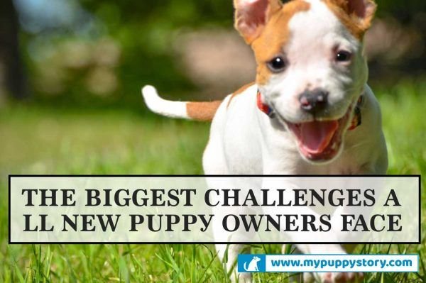 The Biggest Challenges All New Puppy Owners Face – My Puppy Story