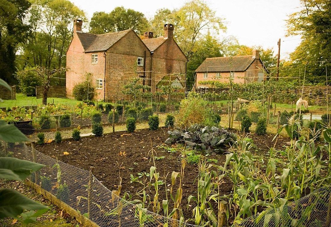 Kitchen garden | Kitchen garden | Pinterest