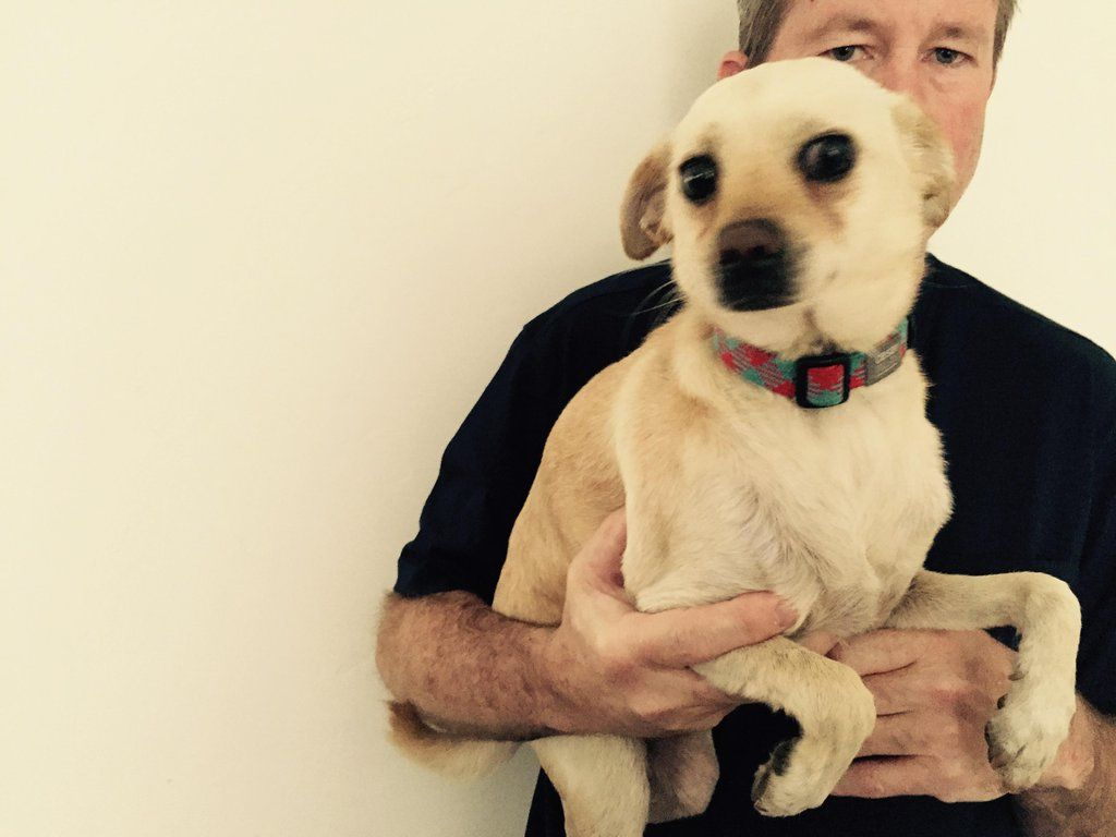 Gayweho Dogs 4 U On Dogs Chihuahua Labrador Retriever