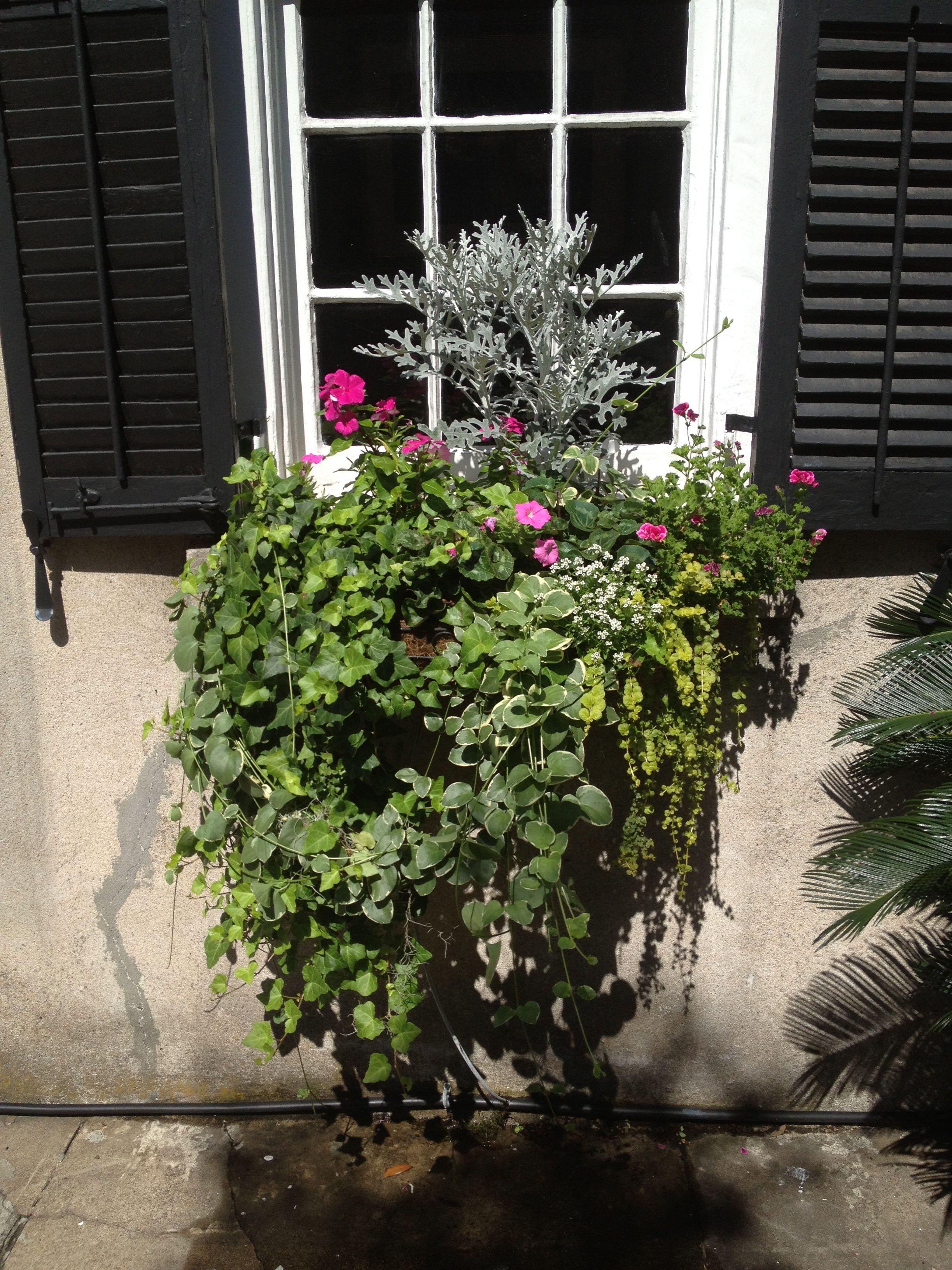 Charleston flower box sept 2012 flower boxes plants garden