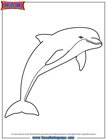 pink dolphin colouring pages | Dolphin coloring pages ...