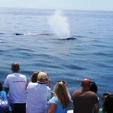 san diego go card whale watching