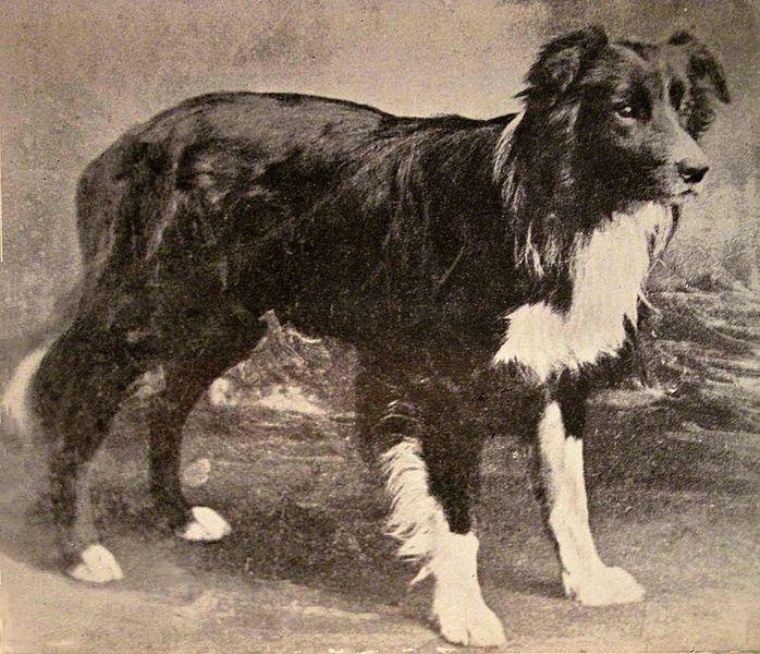 Old Hemp September 1893 May 1901 Nothumberland England Is