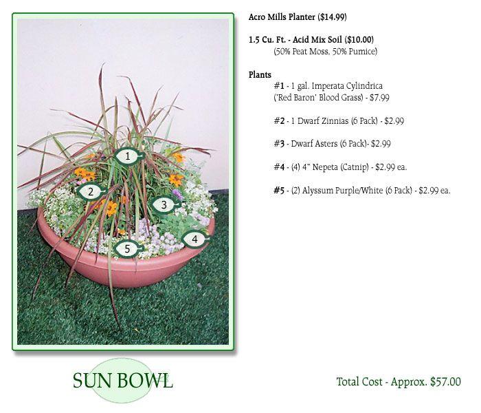 Sun Bowl Garden for Kitties - Let your kitty snack on ...
