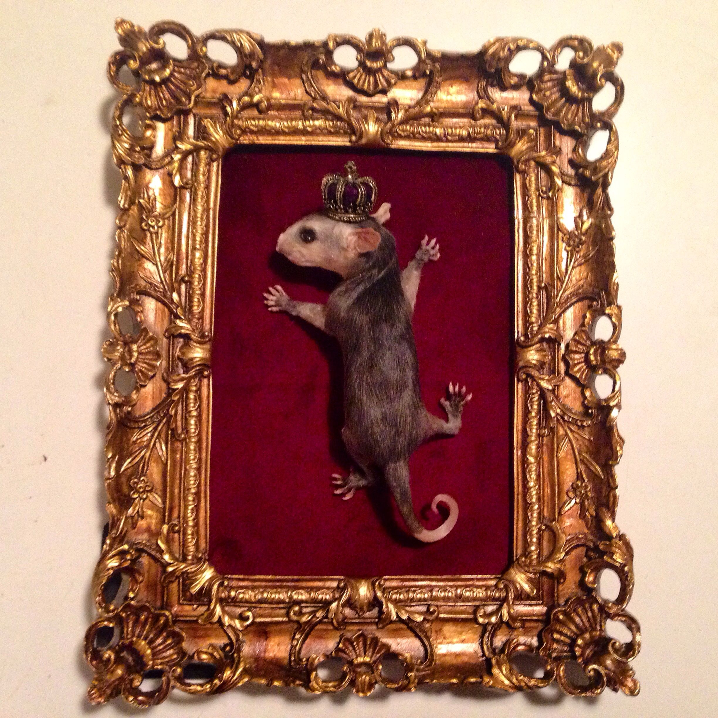 Baby Opossum mount by Cloven Hoof Taxidermy | Taxidermy ...