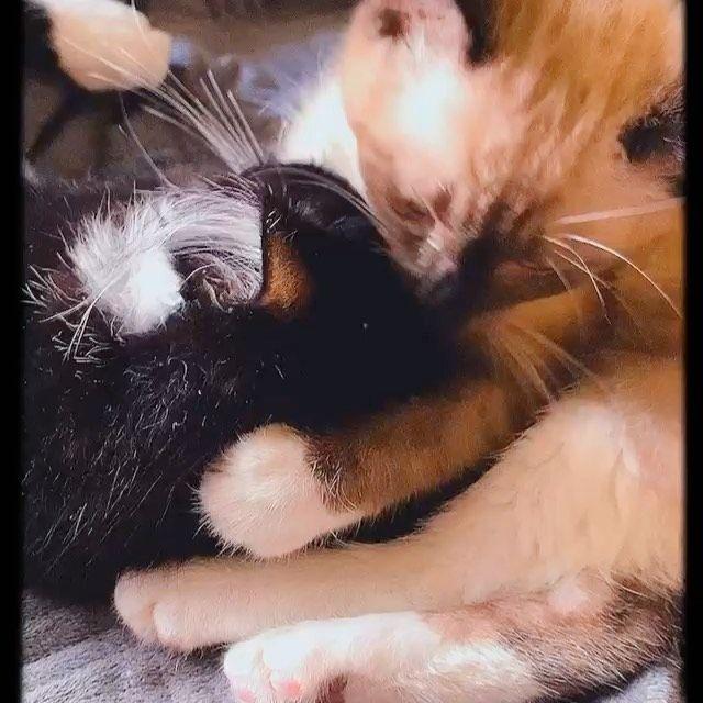 "OREO & KARMA on Instagram: ""Love is all you need 🖤 .. • #instacats #catlove #cutecat #catsofig #animal #petstagram #kittycat #ilovemycat #cat #catloversclub…"""