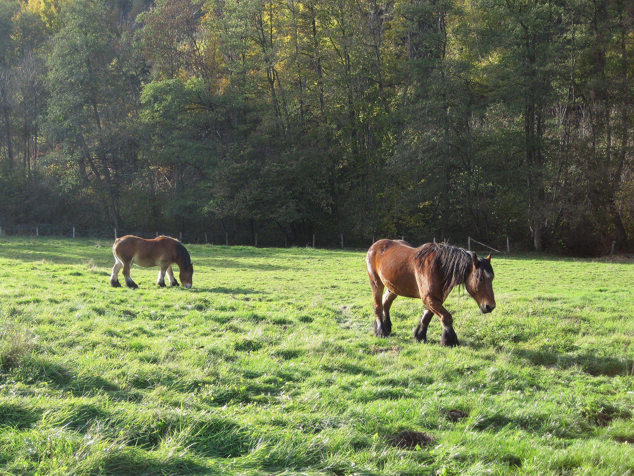 Gartenstraucher Bluhend Winterhart Sanitar Bietigheim Bissingen Vitrinenschrank Glas Horses Draft Horses Animals