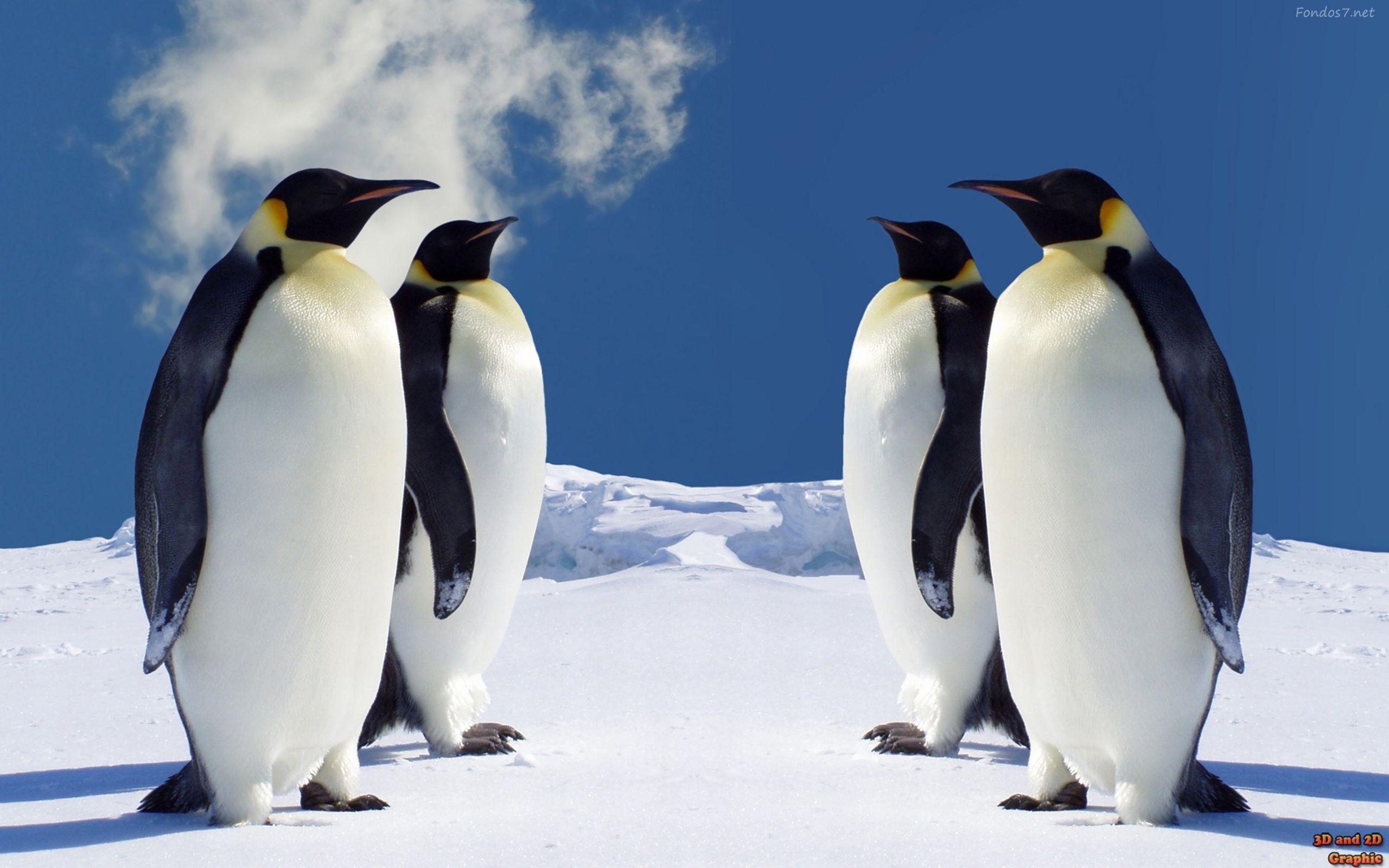 pinguinos bebes - Buscar con Google | PINGUINOS | Pinterest ...