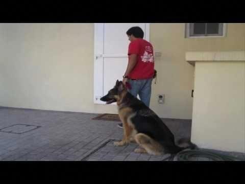 #dogsruletheworld#dogsmakeeverythingbetter#bestdogever#bestdogontheplanetearth #bestdogintheworld