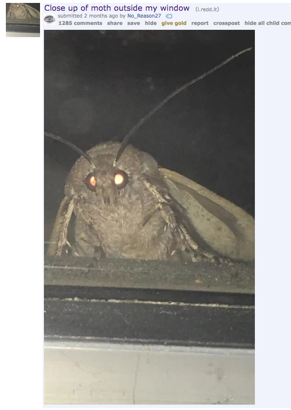 Please Enjoy These 32 Moth Memes That Made Me Cry From Laughing Moth Memes Funny Memes