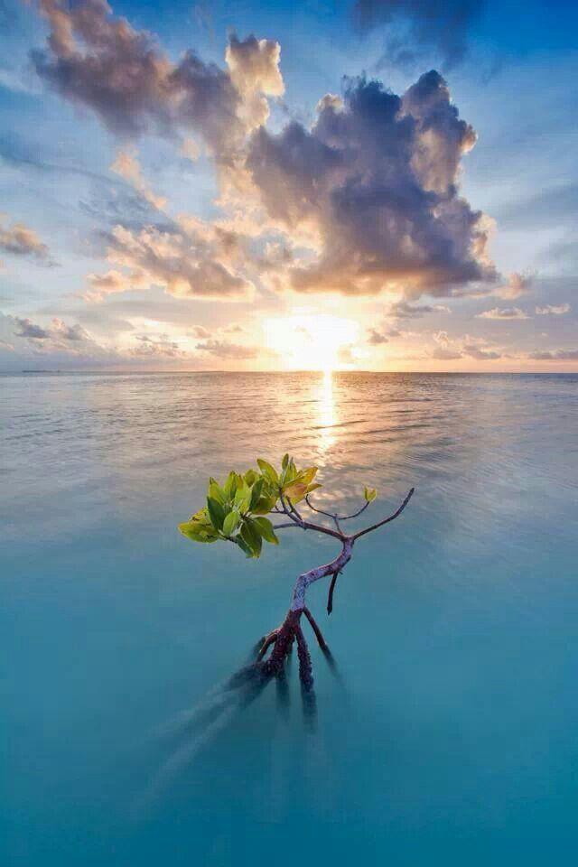 Lone Mangrove, Florida Keys. Island Life