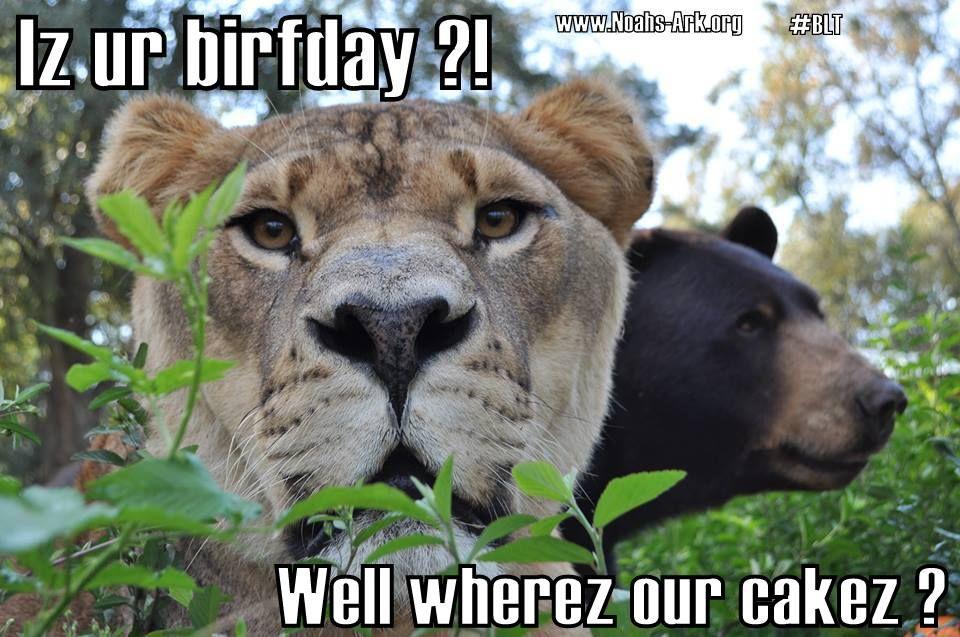 3bcf1cc25918b48ef5c7934838232d86 wherez are cakez?! @kate greenwood kate's birthday board