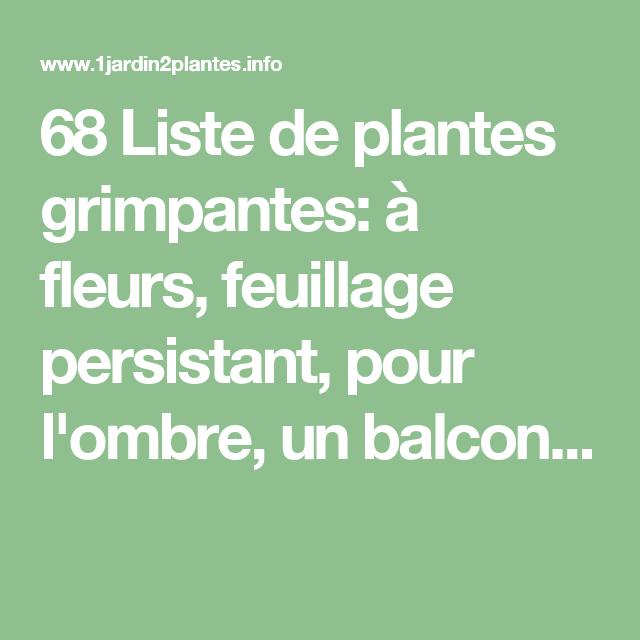 68 liste de plantes grimpantes fleurs feuillage. Black Bedroom Furniture Sets. Home Design Ideas
