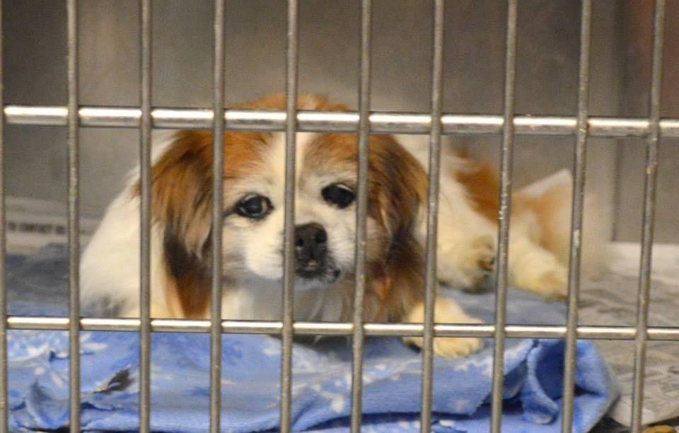 Puppy adoption southern maryland