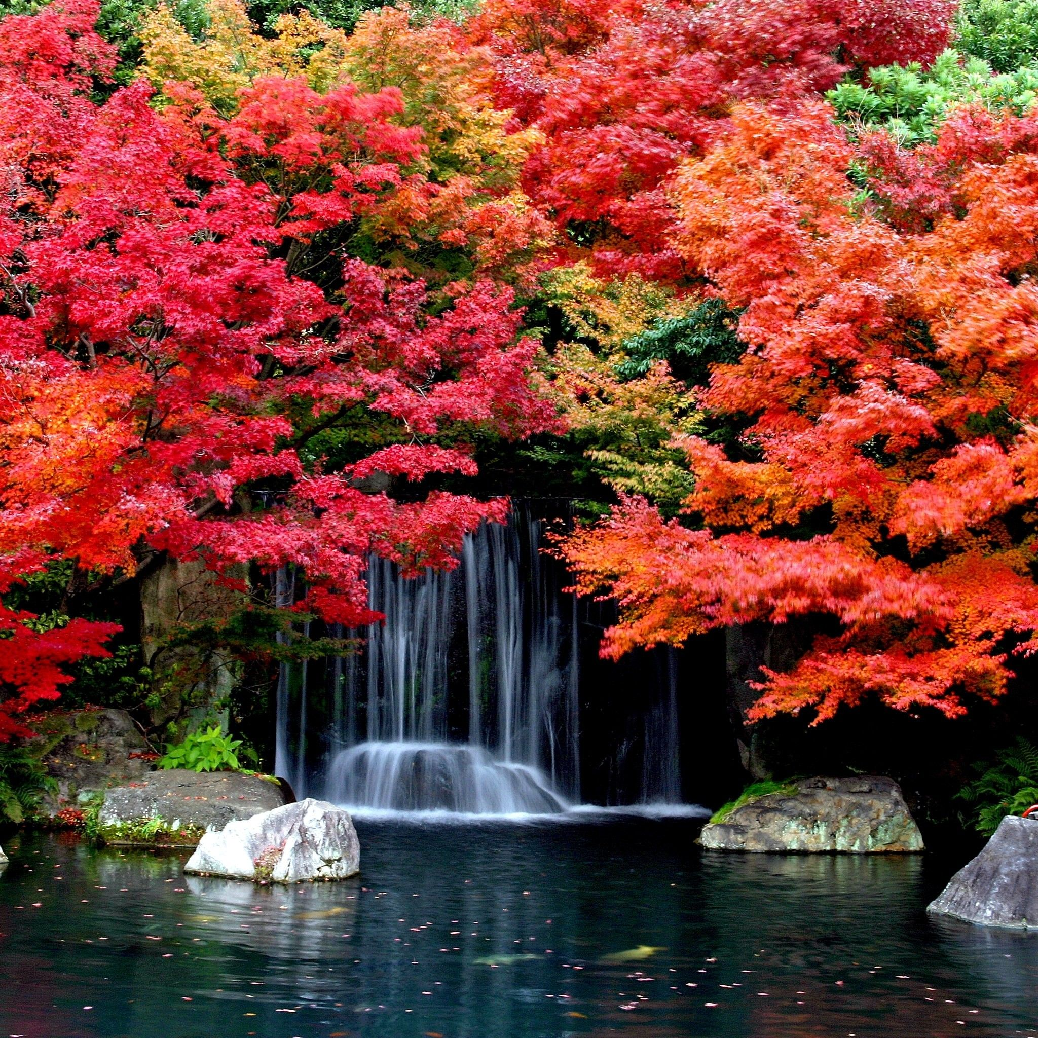 Cool Autumn Waterfall Apple iPad Air Tablet Wallpaper