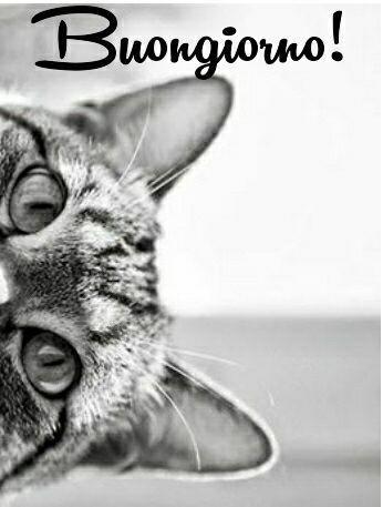 Très Ciao  come stai? | immagini buongiorno | Pinterest | Buongiorno  KB64