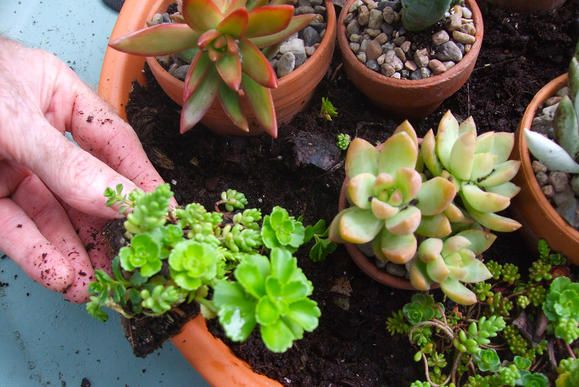 Hosting a garden party is a great way to share your passion for gardening with friends and family. Learn how to create a planter full of succulents to display at your next get together. They would even make for the perfect party favor!