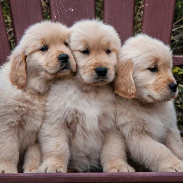 Pinterest Amyaajanaee Sc Kvng Myaa I Add Back Cute Dogs Cute