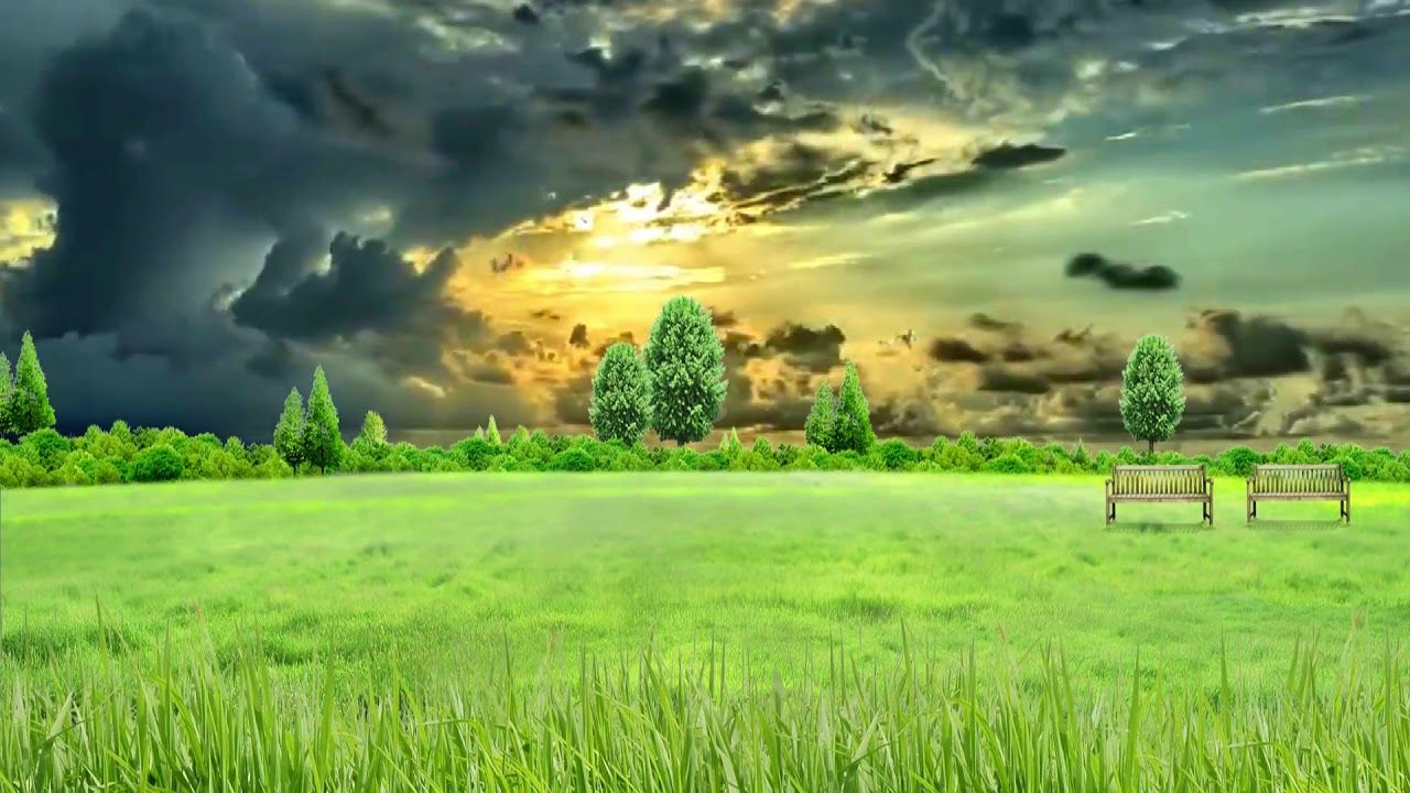Hd 1080p Nature Grass Field Scenery Video Royalty Free Landscape Video Motion Backgrounds Scenery Background