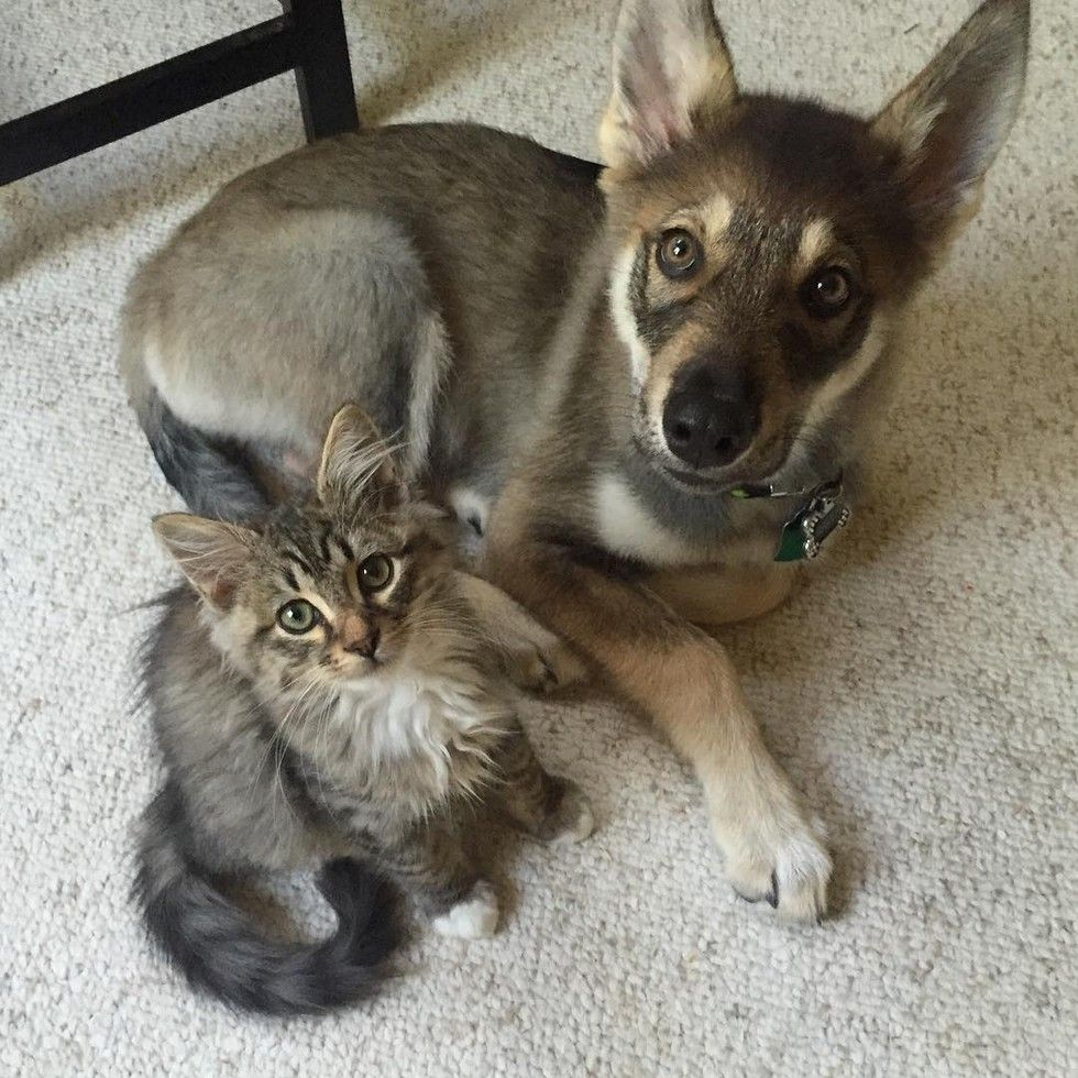 They Have Been Inseparable Since The Day The Puppy Got The Kitten Out Of Shelter Cute Animals Animals Friendship Cute Funny Animals