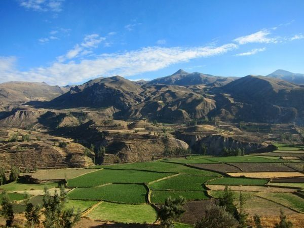 Green terraces of Colca Canyon, Peru