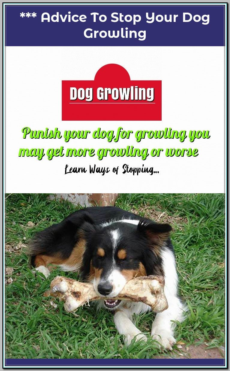 Ways Of Stopping Your Dog From Growling Dogs Dog Hacks Dog