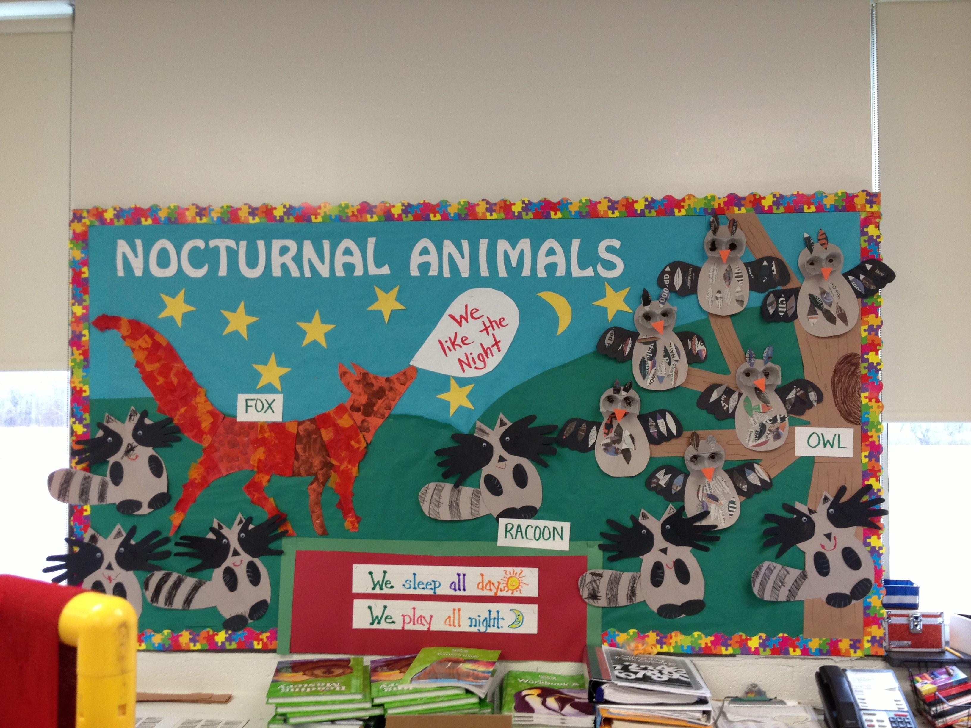 Nocturnal Animals Bulletin Board
