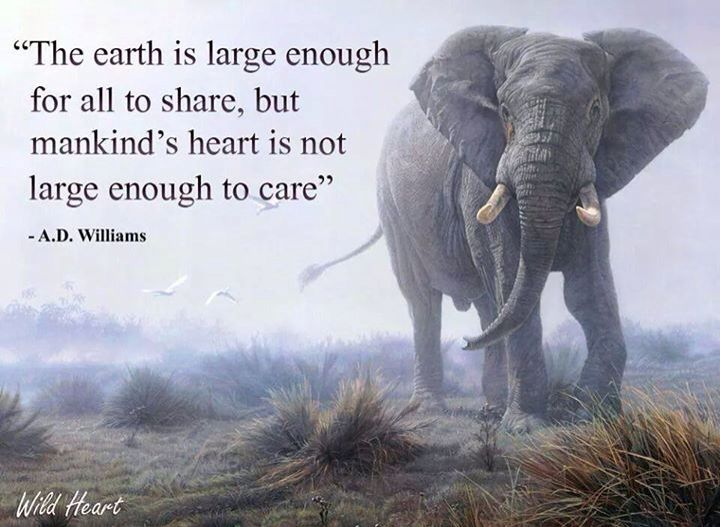 quite i saw on the united against trophy hunting fb page animals