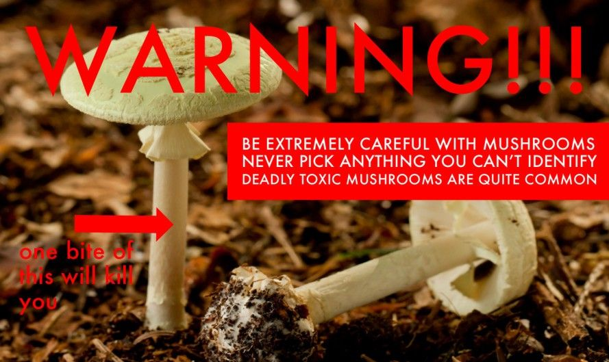 3 Edible Mushrooms That Are Easy To Find And How To Avoid The Poisonous Ones Stuffed Mushrooms Edible Mushrooms Wild Edibles