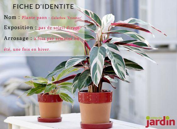 4 plantes du0027intérieur spécial débutants