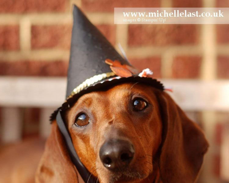 I made a witches hat using Stampin Up products for my dachshund Pippi. I used my stampin up stash and you can order with me 24/7