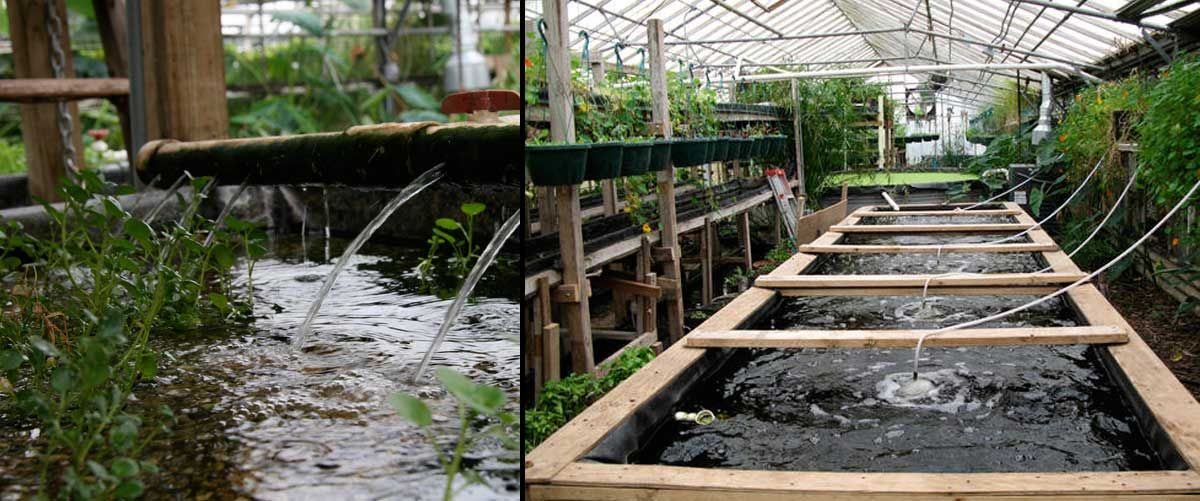 Aquaponics fish farming visit my personal diy aquaponics for Fish pond setup