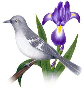 State Birds And Flowers South Dakota Thru Wyoming State Birds Visit Tennessee Bird Pictures