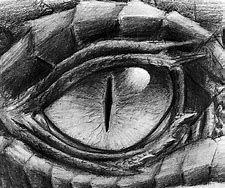 Bildergebnis für drachenkopf bleistift zeichung - #Bildergebnis #Bleistift #drachenkopf #für #zeichnen #zeichung #dragontattoo