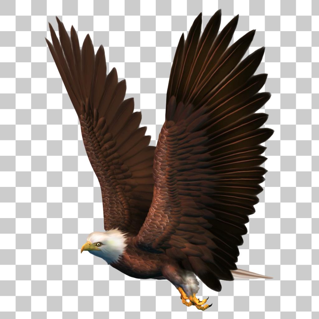 Eagle Hawk Kite Bird Png Image With Transparent Background Bald Eagle Eagle Bird