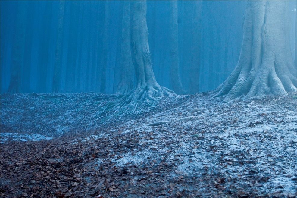 Forest Of Dean Deathly Hallows Part 1 Harry Potter Deathly Hallows Potter