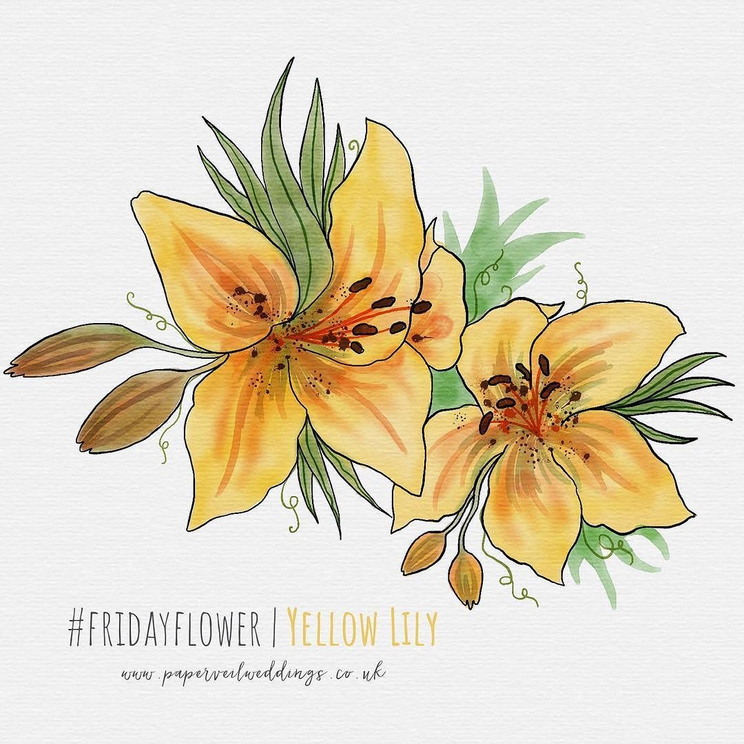 And here is todays fridayflower thanks to felicitylshaw27 for thanks to felicitylshaw27 for suggesting enjoy drawing lily yellowlily yellow illustration flower fridayflower ipadpro sketchesapp botanical izmirmasajfo