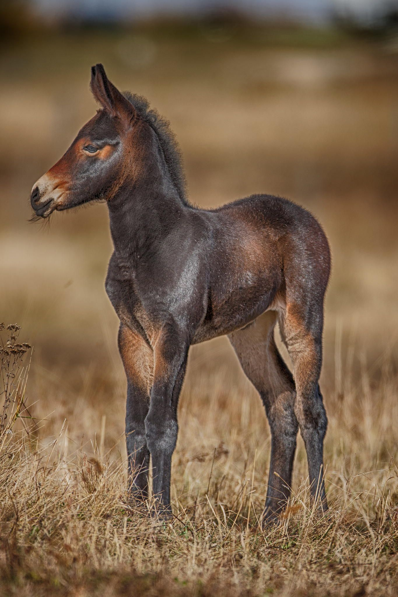 Mule Foal by Rob Stratton on 500px