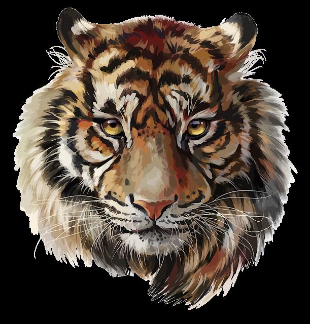 Tiger Head Transparent Clip Art Image Tiger Face Drawing Tiger Face Tiger Art