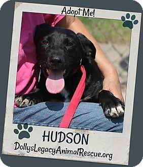 Lincoln, NE - Labrador Retriever Mix. Meet HUDSON, a dog for adoption. http://www.adoptapet.com/pet/18820450-lincoln-nebraska-labrador-retriever-mix