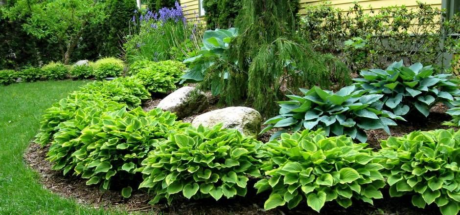 Landscape With Hostas | Hosta Garden | Reder Landscaping   Servicing  Midland, Bay City .